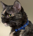 Reflective Paw Print Cat Collar